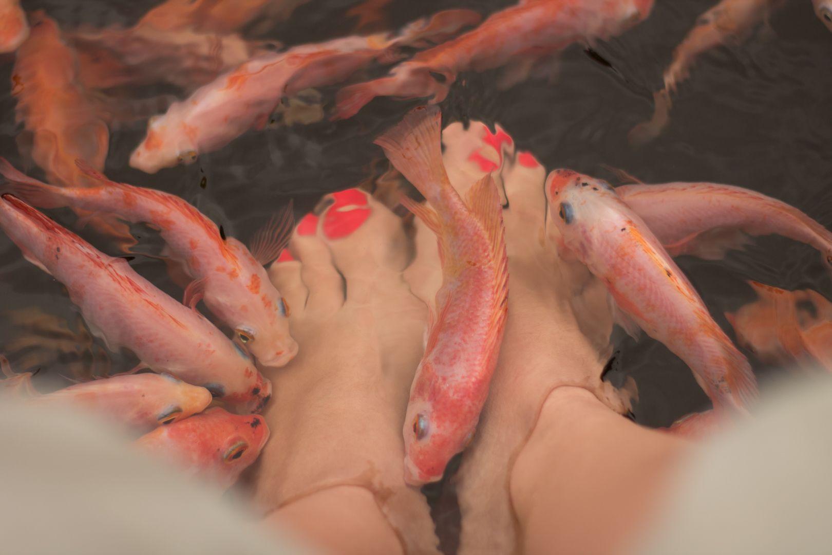 Fish pédicure au Sri Lanka